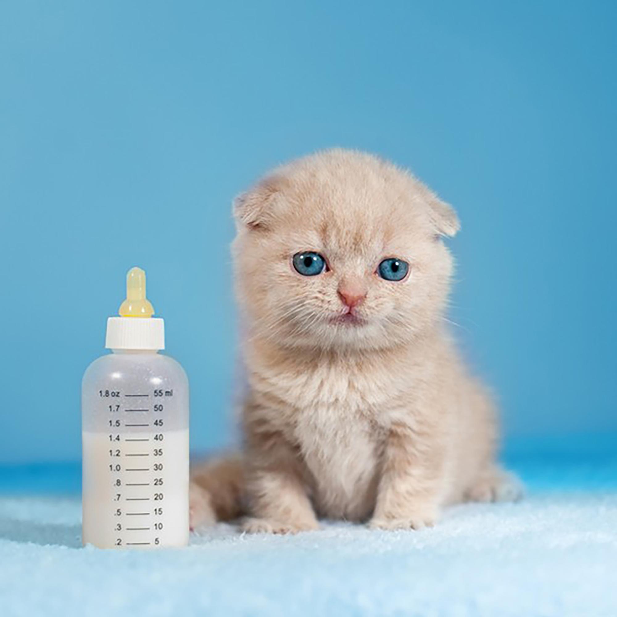 دانلود صدای میو میو گربه [صدای بچه گربه + جیغ گربه]
