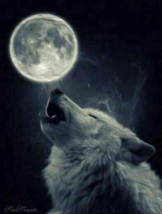 دانلود صدای گرگ [زوزه کشیدن گرگ]