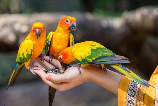 دانلود صدای آواز خواندن زیبای پرندگان